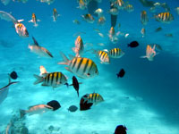 the beautiful tropical fish at stingray city