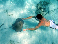 the real stingray city in grand cayman